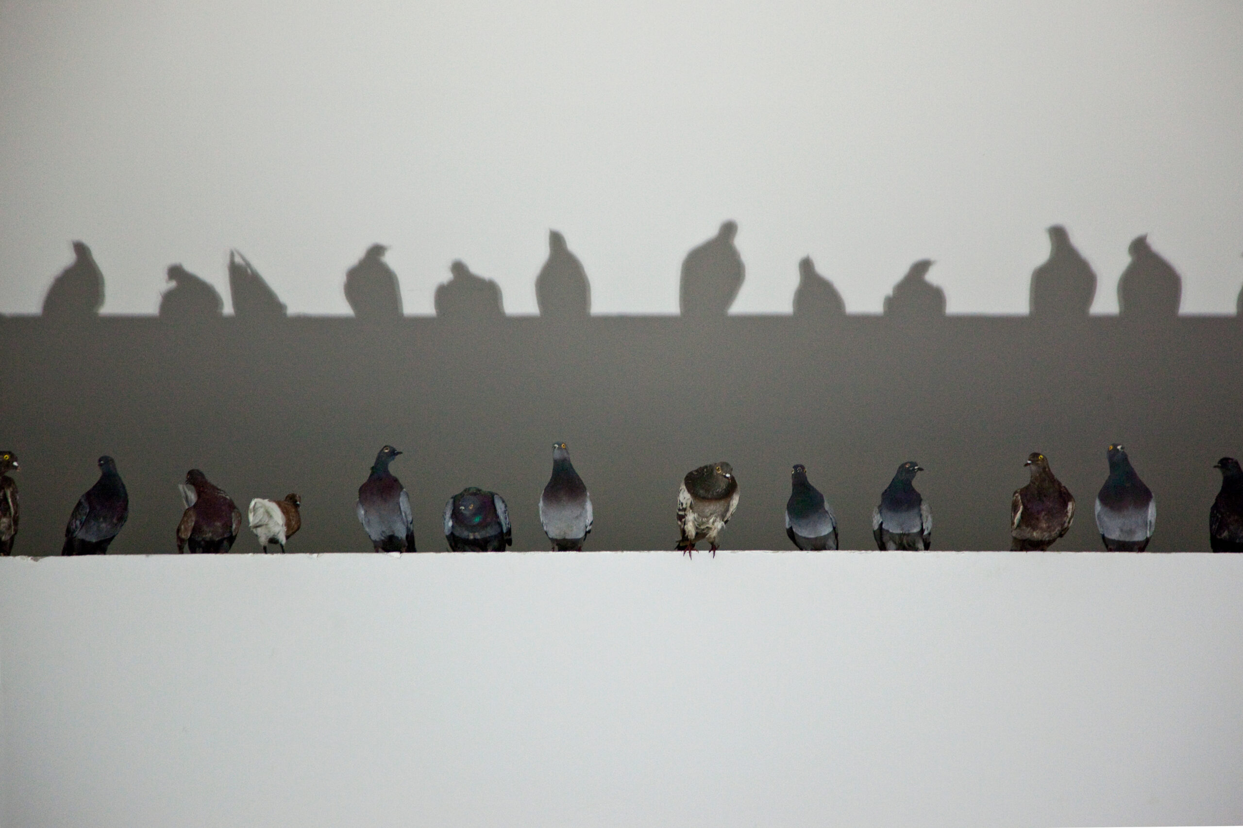 Maurizio Cattelan, Others, 2011, Taxidermied pigeons, Environmental dimensions  Installation view, 54th Venice Biennale, 2011  Courtesy Maurizio Cattelan's Archive  Photo Zeno Zotti