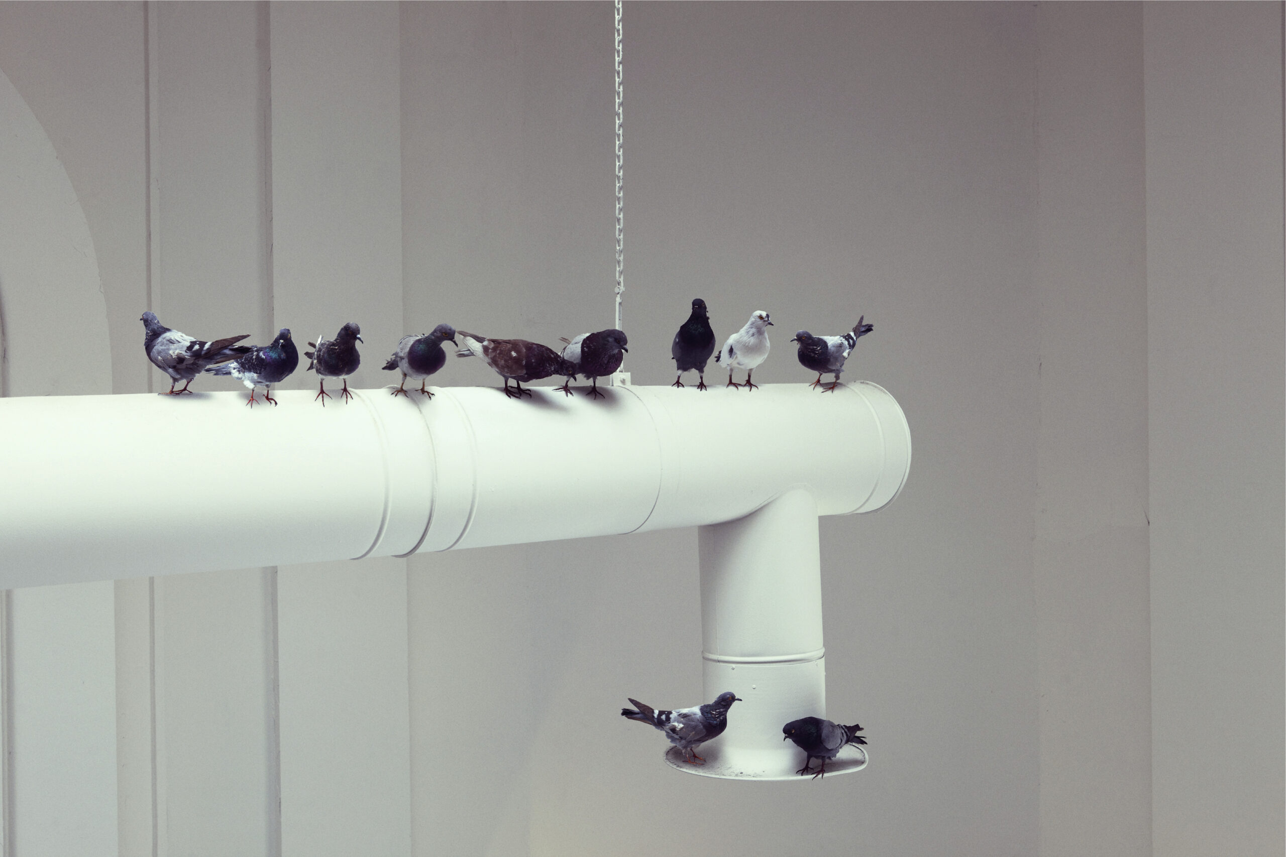 Maurizio Cattelan, Others, 2011, Taxidermied pigeons, Environmental dimensions  Installation view, 54th Venice Biennale, 2011  Courtesy Maurizio Cattelan's Archive  Photo Pier Paolo Ferrari